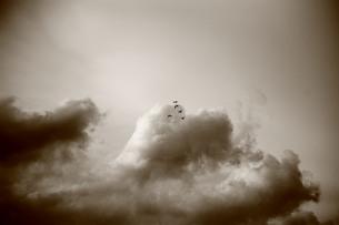 入道雲と鳥の素材 [FYI00133716]