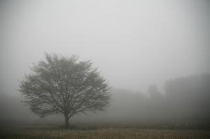 霧に煙る大木の素材 [FYI00133718]