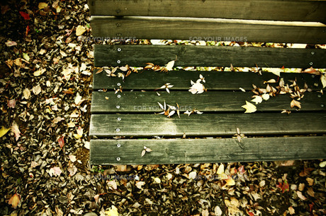 落ち葉とベンチの素材 [FYI00133721]