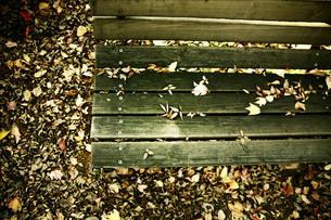 落ち葉とベンチの写真素材 [FYI00133721]