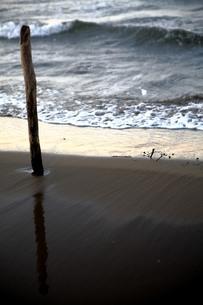 海岸に佇む木の枝の写真素材 [FYI00133722]