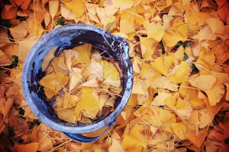 イチョウの落ち葉に埋もれたバケツの素材 [FYI00133732]