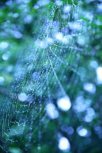 蜘蛛の糸の写真素材 [FYI00133733]