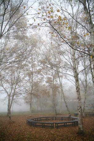靄に煙る白樺並木とベンチの素材 [FYI00133737]