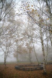 靄に煙る白樺並木とベンチの写真素材 [FYI00133737]