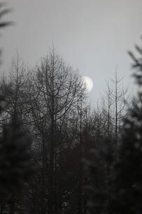 朝もやの針葉樹林から覗く朝日の素材 [FYI00133739]