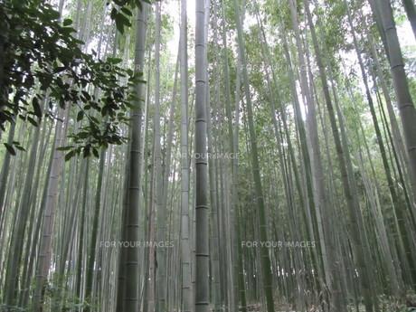 嵐山の風景の写真素材 [FYI00133772]