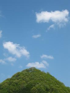大木と空の写真素材 [FYI00133795]