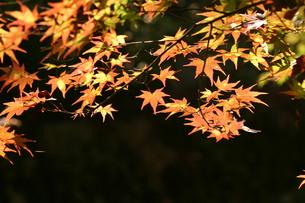 秋の予感の写真素材 [FYI00133914]