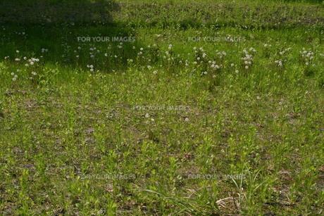 草場の素材 [FYI00133946]