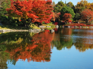 秋の写真素材 [FYI00134121]