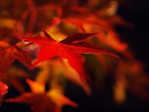 紅葉の写真素材 [FYI00134122]