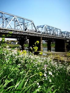 春の多摩川の写真素材 [FYI00134134]