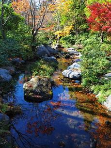 秋の小川の写真素材 [FYI00134147]
