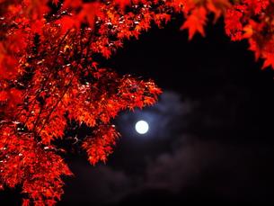 紅葉と月の写真素材 [FYI00134161]
