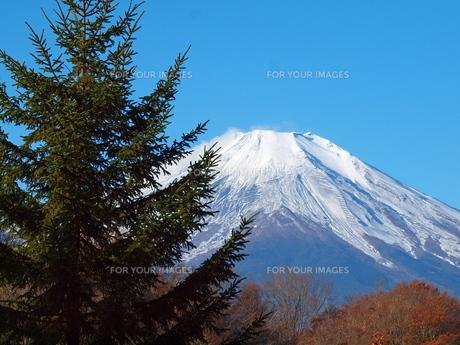 秋の富士の写真素材 [FYI00134181]