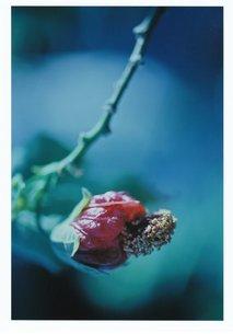 跳び出そうな何か / 被写体:不明の花の素材 [FYI00134211]