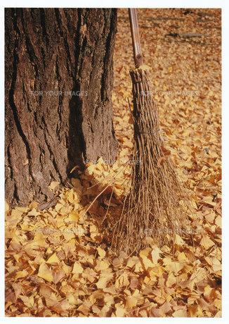 イチョウの絨毯 / 被写体:イチョウの落ち葉の写真素材 [FYI00134221]