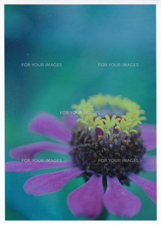 ティアラをつけたバレリーナ / 被写体:野花の素材 [FYI00134222]