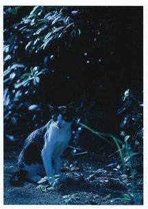 猫の町の扉が閉まる頃 / 被写体:自由猫の素材 [FYI00134233]