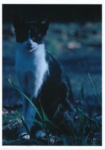 猫の町の扉が開く頃 / 被写体:自由猫の素材 [FYI00134236]