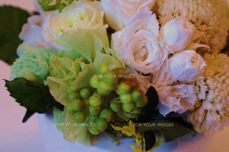白い薔薇のプリザーブドフラワーⅢの素材 [FYI00134250]