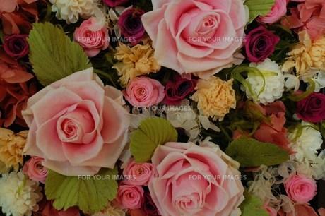 ピンクの薔薇のプリザーブドフラワーの素材 [FYI00134252]
