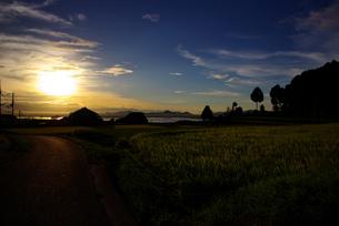 琵琶湖を臨む稲田の写真素材 [FYI00134473]