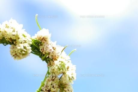 空と花の写真素材 [FYI00134515]