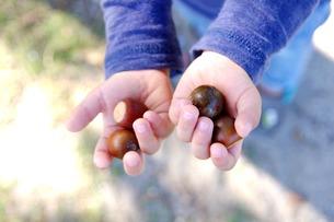 どんぐりを持つ子供の手の素材 [FYI00134562]