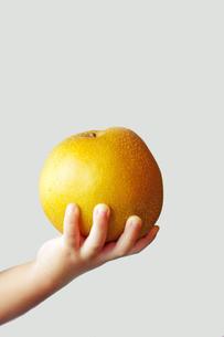 梨を持つ子供の手の写真素材 [FYI00134563]