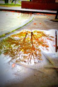 秋の雨あがりの素材 [FYI00134585]