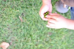 木の実を持つ子供の素材 [FYI00134605]