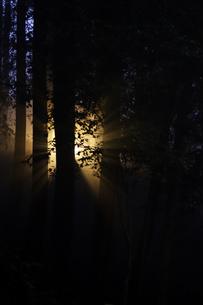 光の素材 [FYI00134776]