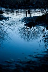 水鏡に映った木の写真素材 [FYI00134778]