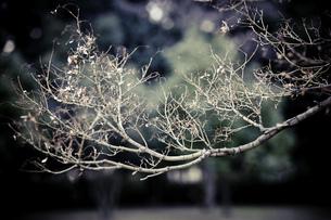 冬支度完了の素材 [FYI00134785]