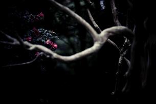 森の素材 [FYI00134791]