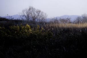 白昼夢の素材 [FYI00134793]