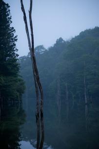 まっすぐ天を指す木々の素材 [FYI00134794]