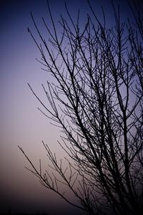 冬グラデの素材 [FYI00134796]