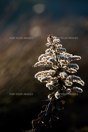 portrait of grass 2の素材 [FYI00134802]