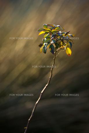 portrait of grassの素材 [FYI00134804]