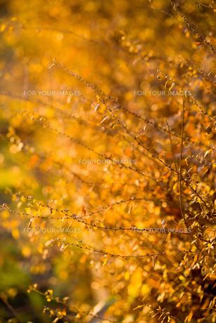 the yellowの素材 [FYI00134809]