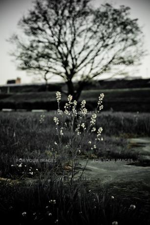 ここに咲くの素材 [FYI00134816]