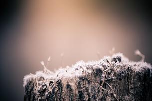 top snowの写真素材 [FYI00134826]