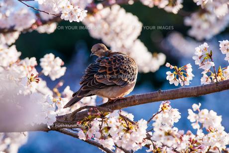 呼びかけるのは春の素材 [FYI00134827]