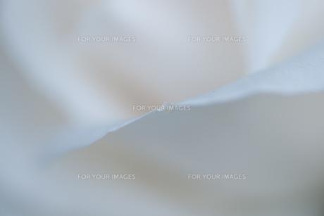 白のなかへの素材 [FYI00134833]