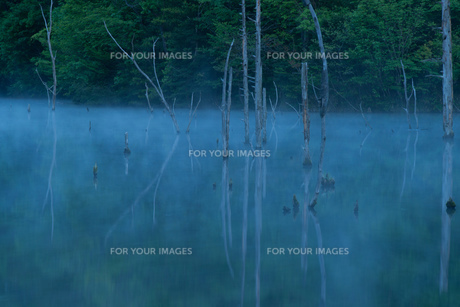 霧の中の素材 [FYI00134836]