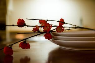 梅と皿の素材 [FYI00134837]