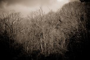 cloudy morningの写真素材 [FYI00134840]